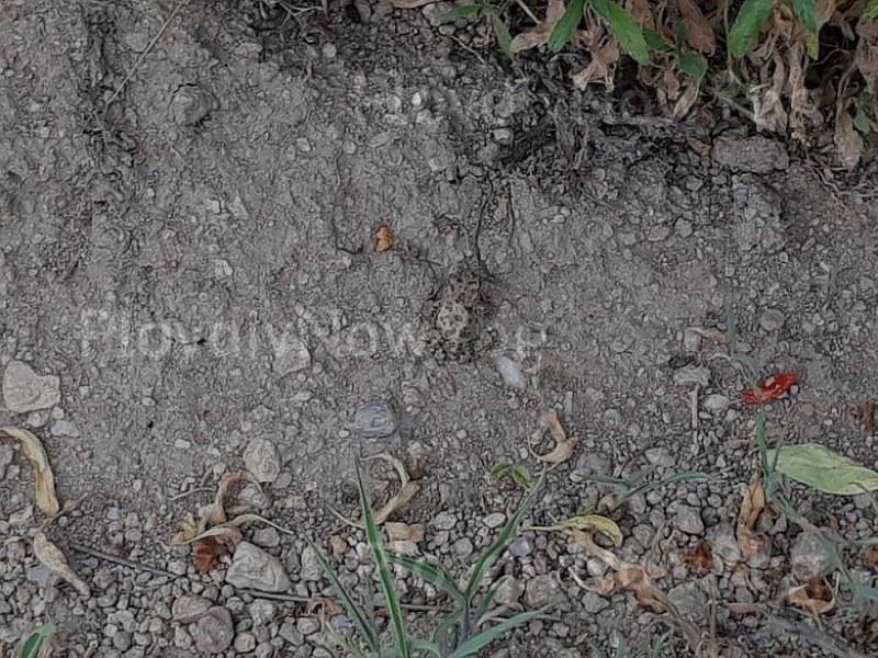 Нашествие от хиляди жаби паникьоса Брезовско СНИМКИ