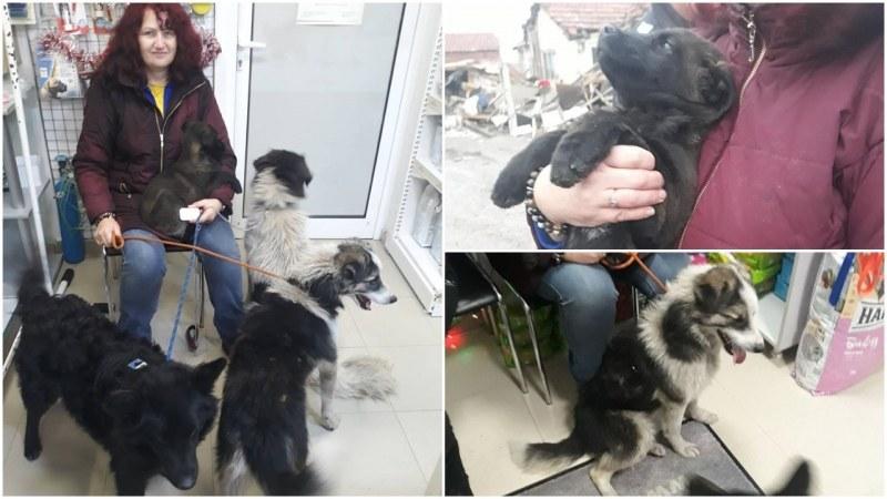 Евакуираха кученца и котенца от Войводиново
