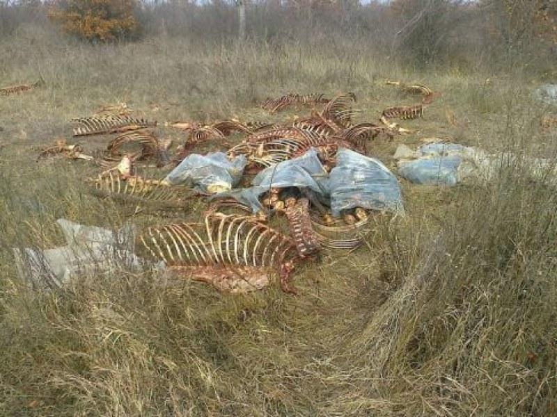 Скелети на коне са зловещо нахвърляни край Брезово