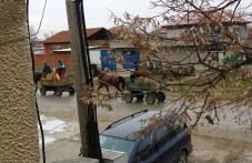 Роми впрегнаха каруци с незаконно отсечени дървета край Белозем ВИДЕО