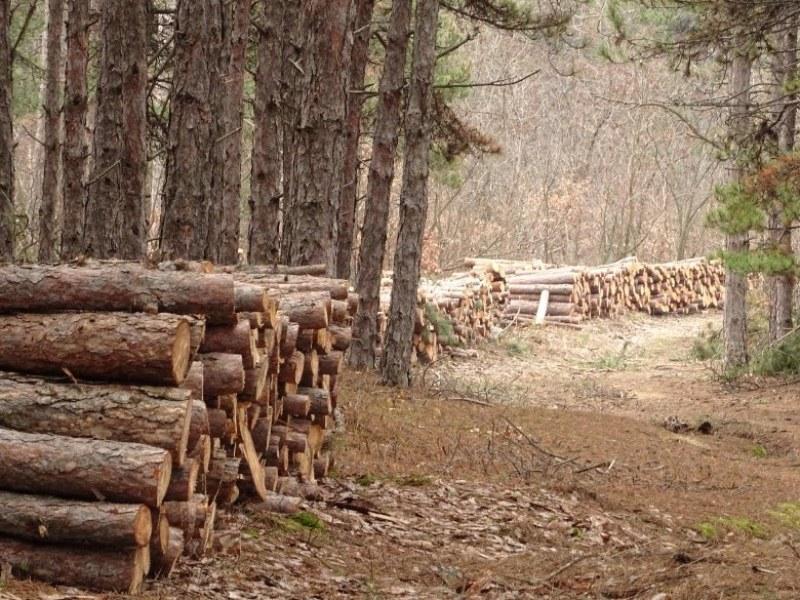 Някой изсича гората в Хисаря, мерцедеси изнасят трупите СНИМКИ
