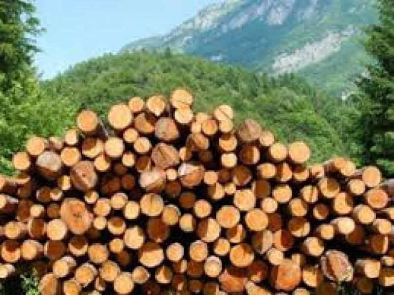 Масирани проверки в Пловдивско за незаконна дървесина, провериха над 120 частни имота