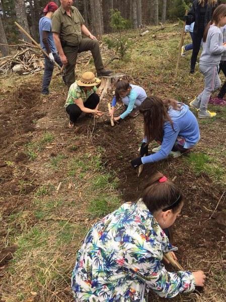 """Засаждат 3000 дръвчета край Стамболийски в кампанията """"Да залесим България"""""""