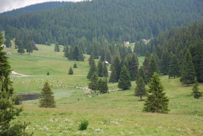 Ловното стопанство в Кричим ще бъде представено официално днес