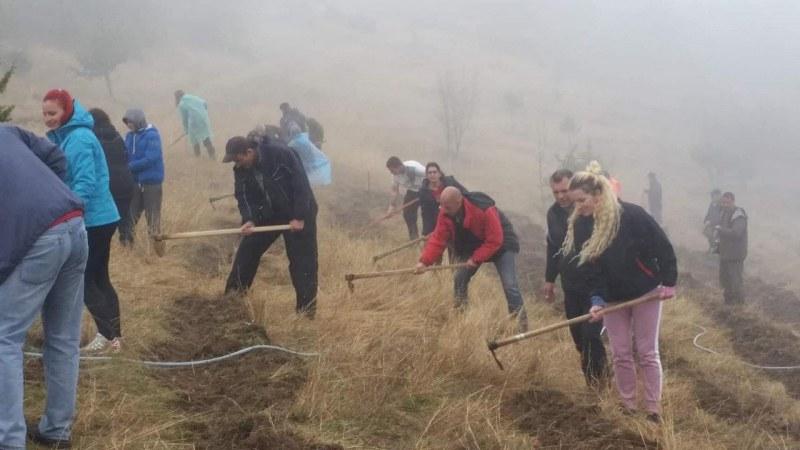 Доброволци създадоха борова гора край Куклен СНИМКИ