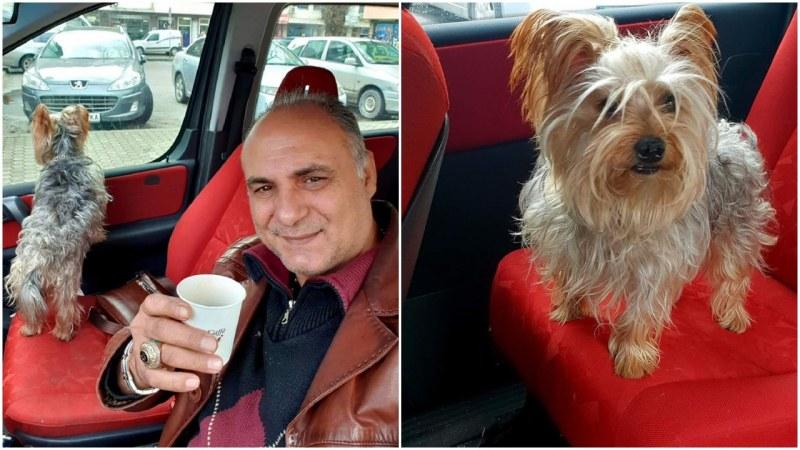 Синът на Цар Киро неразделен с кученцето си, вози го и в луксозната си кола