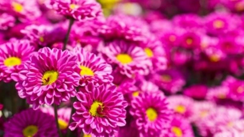 Раковчани се състезават за най-хубава цветна градинка