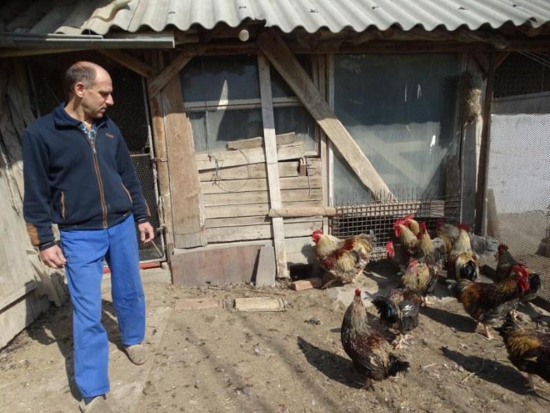 Яйца рекордьори от щастливи кокошки боядисват за Великден в пловдивско село ВИДЕО