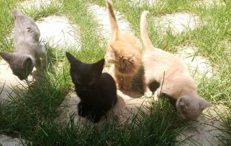 Умъртвиха четири котета в Катуница