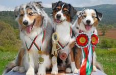 600 породисти кучета от цял свят ще дефилират на изложба край Пловдив СНИМКИ
