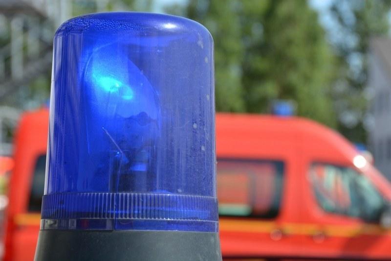 Дърво падна върху работник в Рогош, човекът е със спукан череп