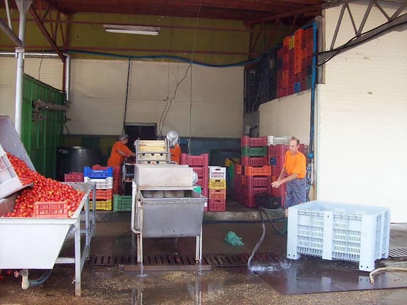 Учители и хора за производство на консерви се търсят в Първомай