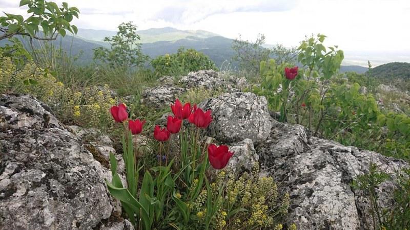 Поставиха уеб камера на Метоха, почистиха и маркираха живописни маршрути край Асеновград