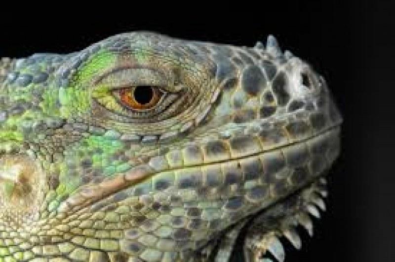 Отмъкнаха змии и игуана - домашни любимци на пловдивчанин