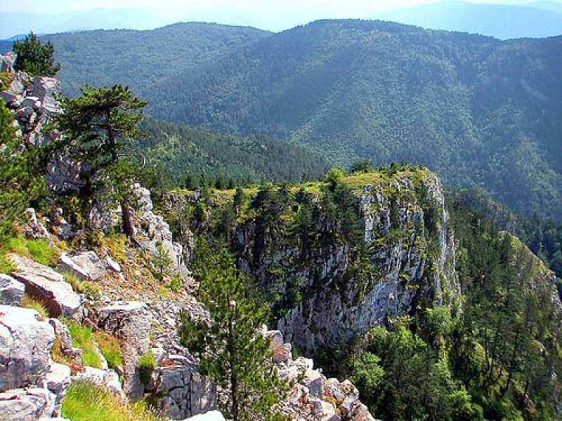РИОСВ провери през май защитени местности и пунктове за билки край Асеновград и Стамболийски