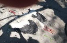 Зверство в Стамболийски! Ромски деца убиха щъркел и се гавриха с него