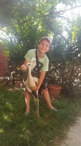 Малък герой! Дете от Белозем спаси паднал от гнездото си щъркел