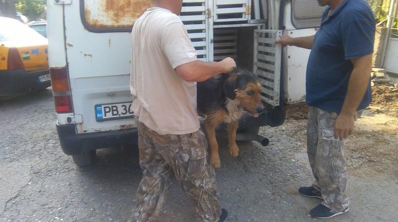 Агресивното куче в Асеновград, нападнало 8-годишно момче, е вече в приют