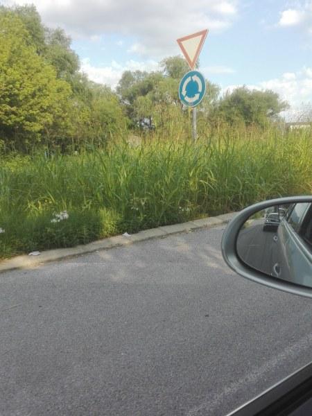 Опасност на пътя! Висока трева прегради кръгово кръстовище край Пловдив