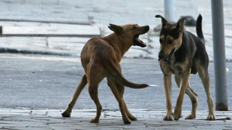 Бездомно куче в Перущица нападна и нахапа жена пред детето й
