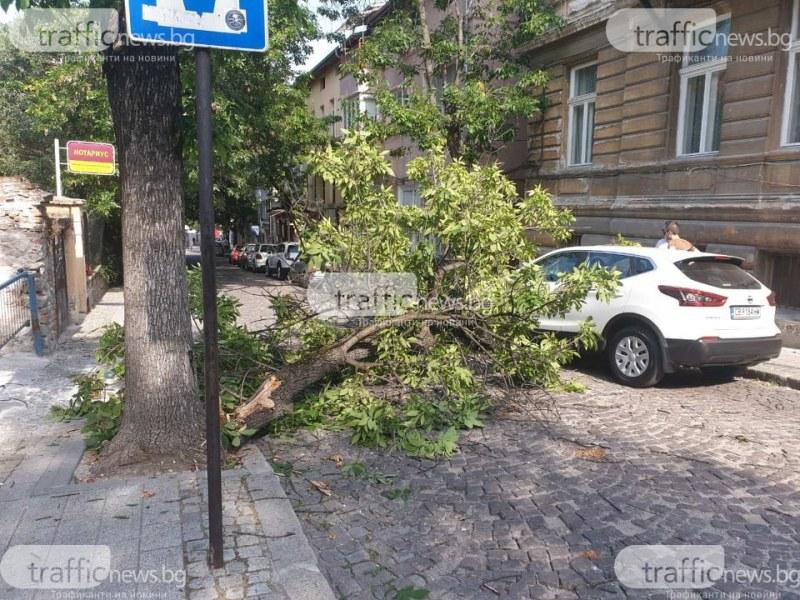 Голям клон падна върху кола, пълна с хора в центъра на Пловдив