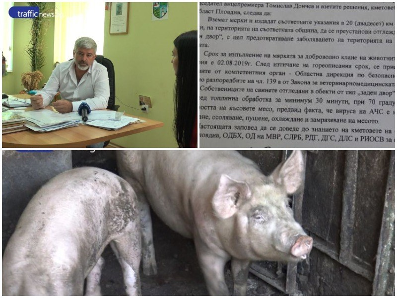 Масово колят прасетата в Пловдивско, в Белозем стартира информационна кампания