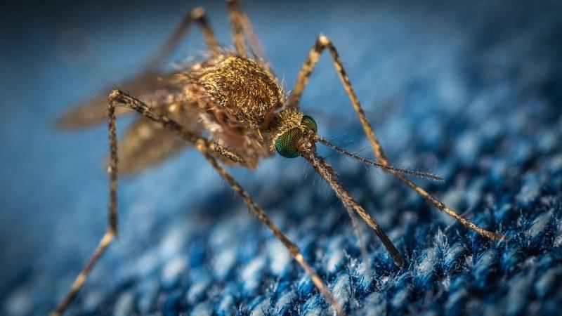 Пръскат срещу комари в община Сопот, пчеларите да вземат мерки