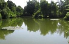 Спасените деца от Въча край Стамболийски отишли на реката, за да не пречат при коленето на прасе