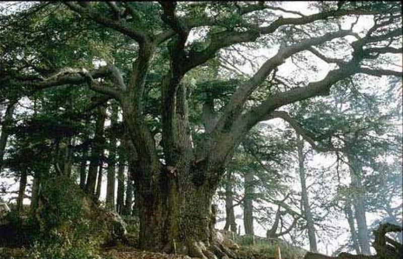 Има ли стари дървета с дълга история около вас? Изпратете снимки, участвайте в конкурс!
