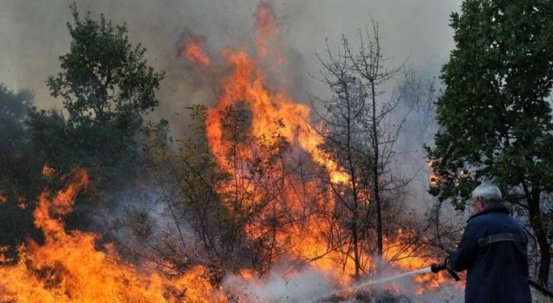 Широколистна гора се запали край Калояново, горят и лозя в Карловско