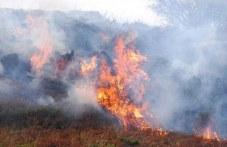 Голям пожар избухна в гората край пловдивски язовир
