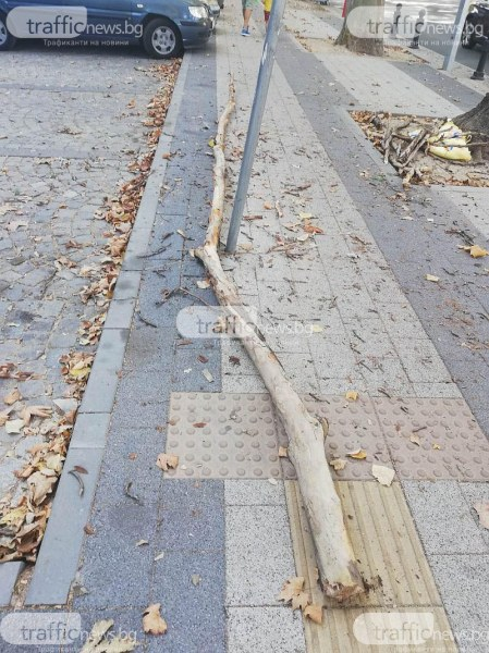 Огромен клон се стовари в центъра на Пловдив, по чудо няма пострадали