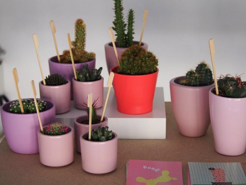Тематичен  Botanical Bazaar за приключения с растения започва в Капана през уикенда