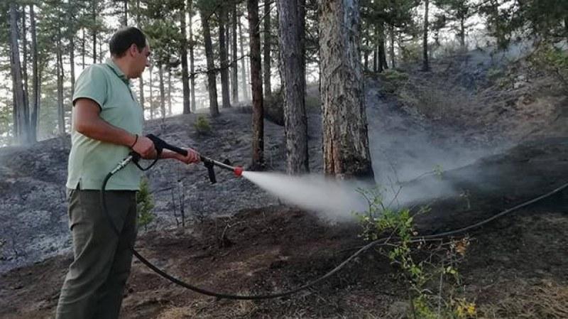 Пожар избухна в Карловско, засегнати са 7 декара борова гора
