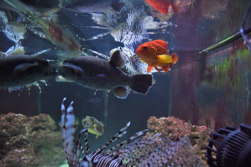 32 от най-отровните риби в света се събраха в пловдивски музей