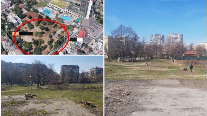 """Върнаха на работа уволнена от Ральо Ралев еколожка, отстранена заради сечта в парка в """"Северен"""""""