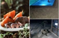 Хранят мечето-плувец от Сопот с тиква и мед преди зимния сън