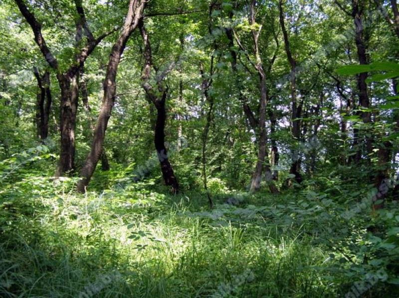 Търсят доброволци за възстановяване на крайречната гора до Стамболийски