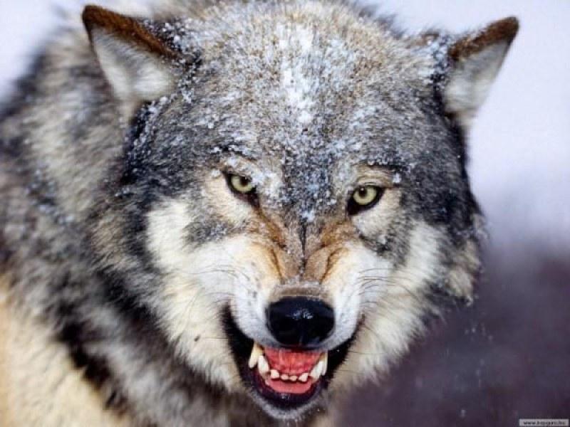 Младеж се озова на дърво, за да се спаси от вълци в Карловско, наричат го вече Тарзан