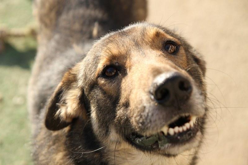 Арестуваха мъж от Съединение, прострелял смъртоносно кучето на  съседката си