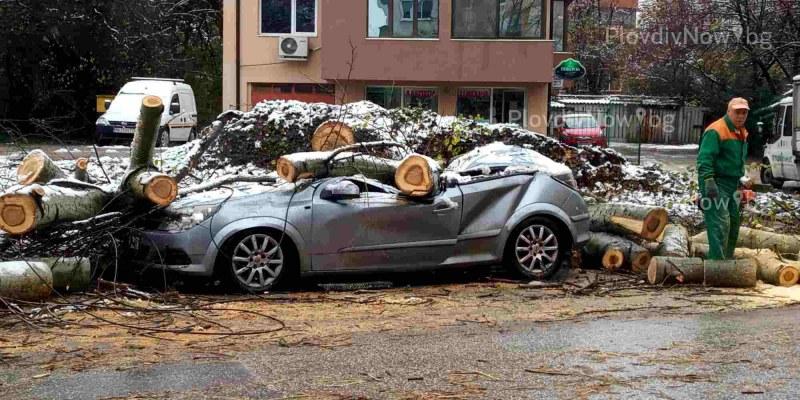 40-годишна топола премаза кола в Пловдив на метри от училище