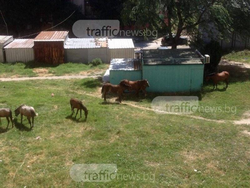 Жител на кв.Столипиново отнесе акт за отглеждане на четири коня в междублоково пространство