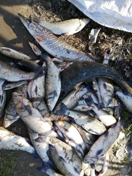 Прокуратурата започна разследване за замърсяването на река Марица