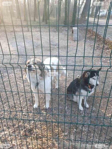 Стопани зарязаха кучетата си на площадка в Тракия, други хора ги спасиха