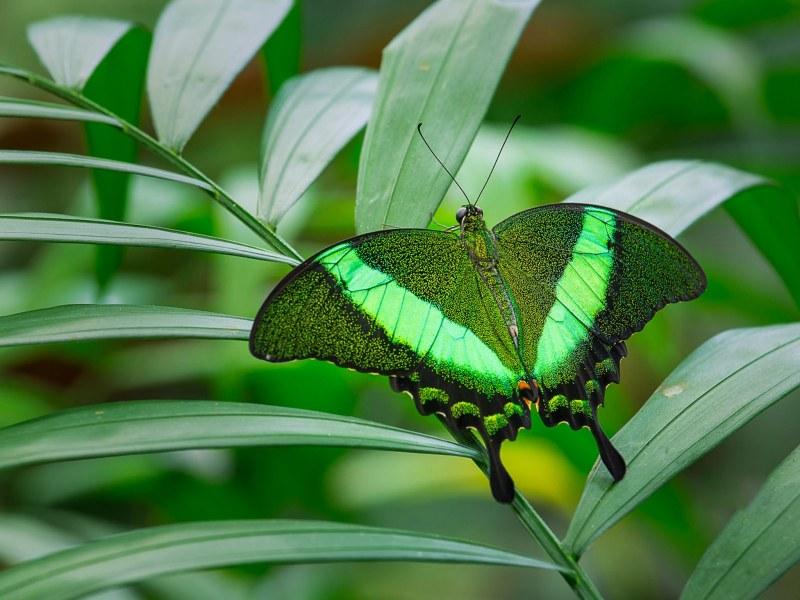 """Пъстър и приказен """"Фестивал на пеперудите"""" очаква пловдивските малчугани"""