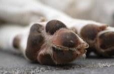 Мъж уби кучето си кол в Първомайско, душило кокошките!