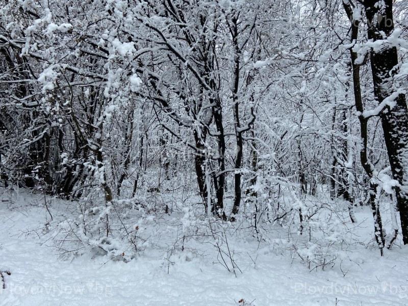 Зимна приказка! Снегът вали и трупа в кукленското село Гълъбово