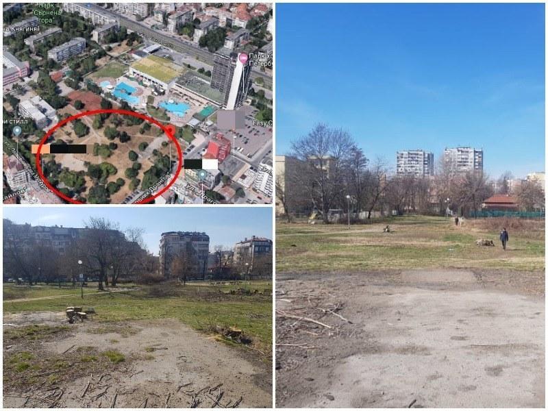 """Потвърдиха окончателно глобата за незаконната сеч в парка зад хотел """"Санкт Петербург"""""""