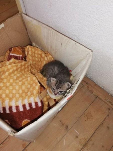 Съвсем малко котенце в Калояново спешно си търси дом