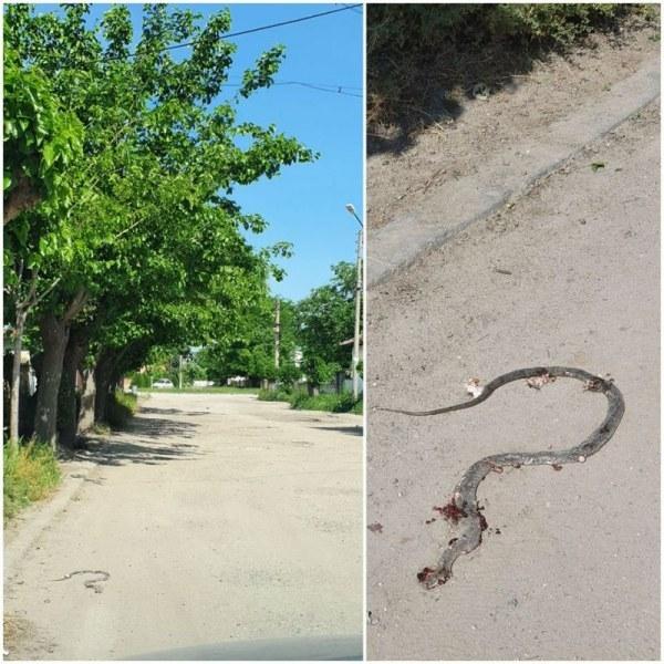 Змии плъзнаха в Труд, селото е обрасло с трева